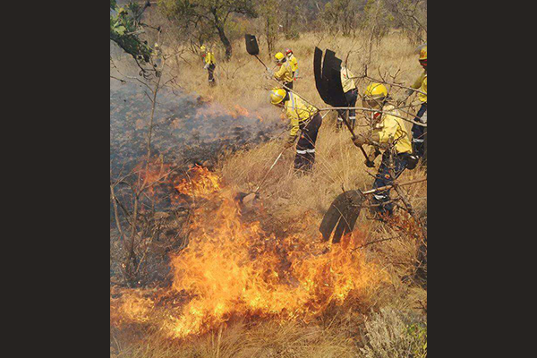 <p>150 fire-fighters dispatched</p>
