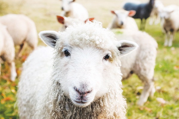 <p>Stock theft on the increase</p>