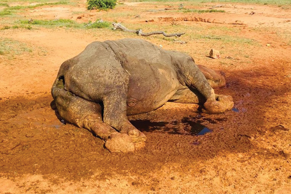 <p>Brutal rhino poaching<br /> Security forces are on high alert after brutal rhino poaching</p>
